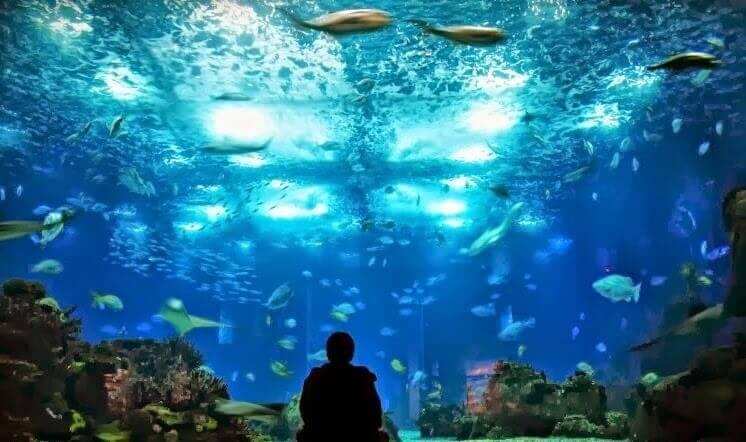 Bezienswaardigheden in Lissabon: Oceanario de Lisboa