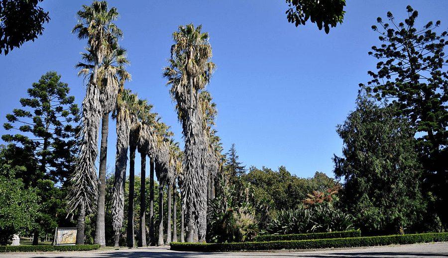 Jardím Botânico Tropical